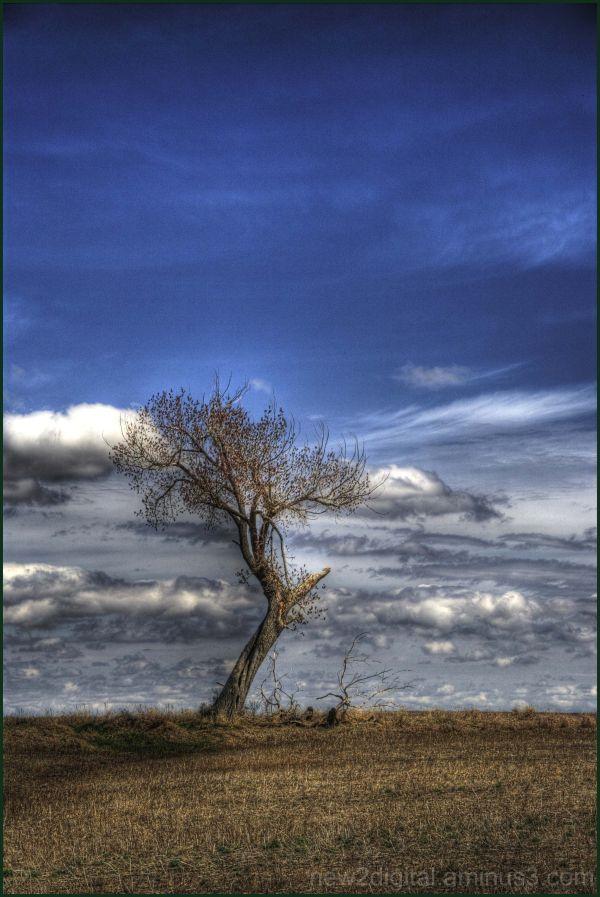 The Tree 2/3