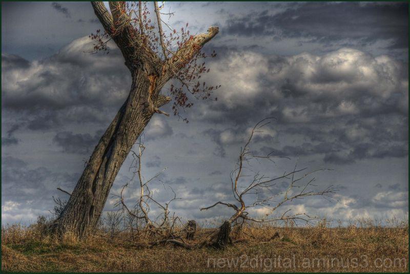 The Tree 3/3