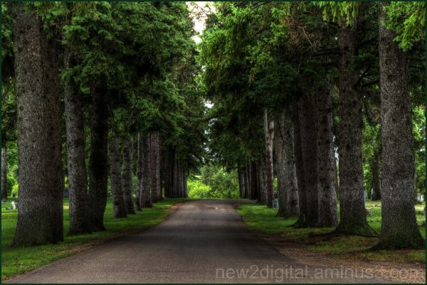 Forest Road 1/2