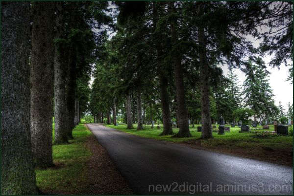 Forest Road 2/2