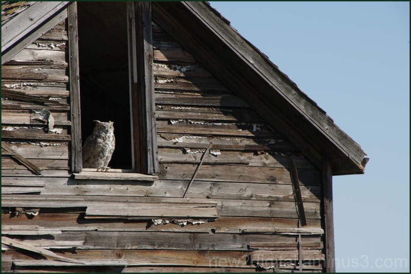 The Owl's Home