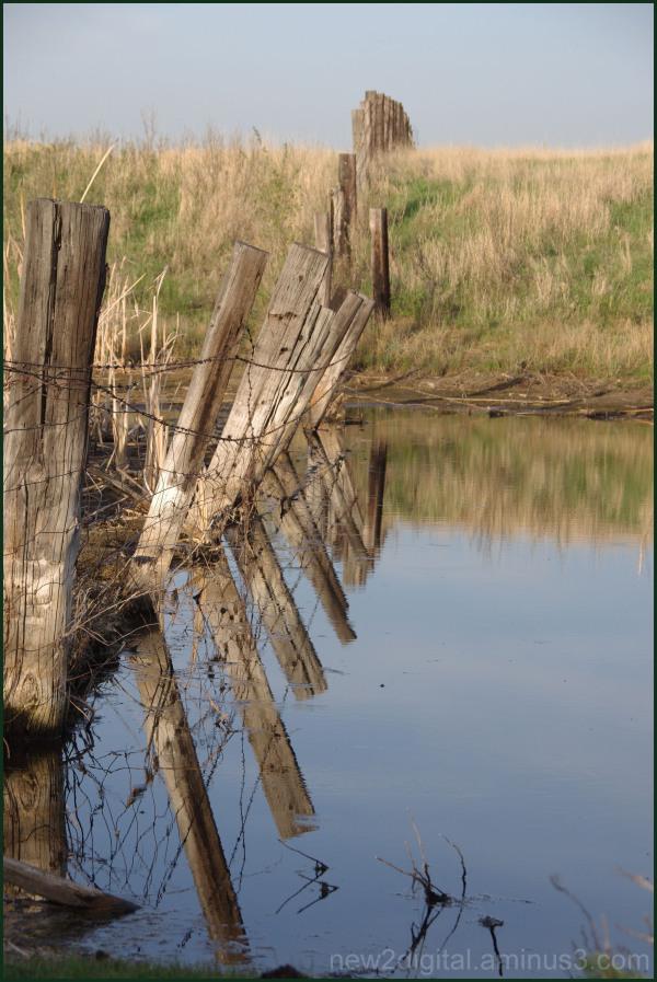 Pond Fence