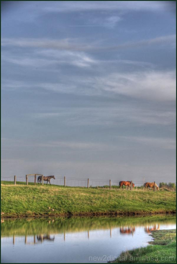 Horses 2/4