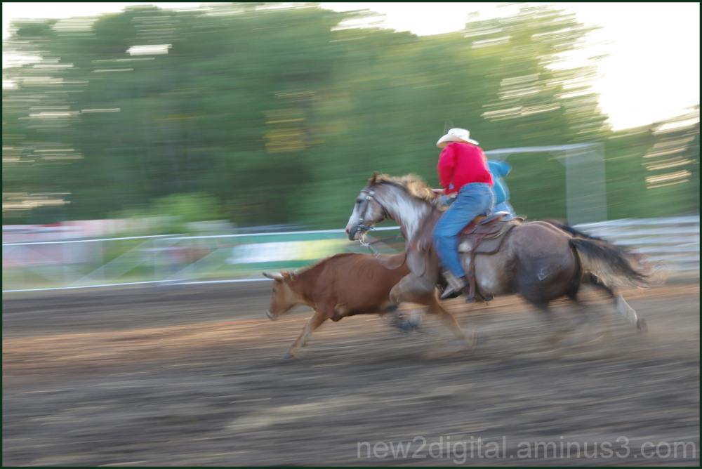 Calf Chasing