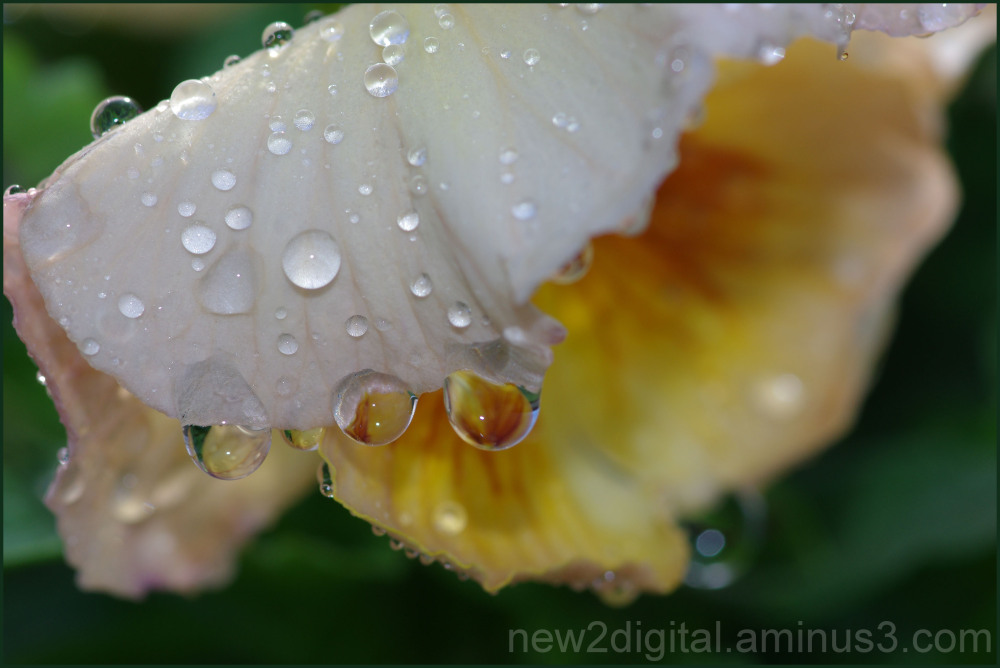 After the Rain 1/2