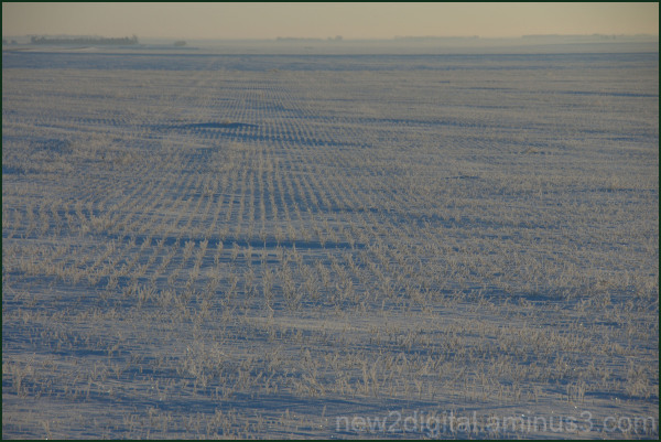 Field of Cold