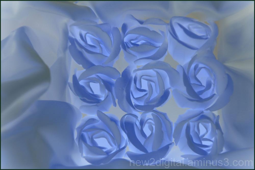 Roses, Roses 1/4