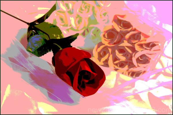 Roses Roses 3/4