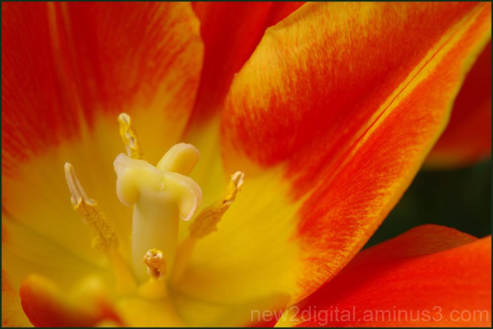 Yellow and Orange