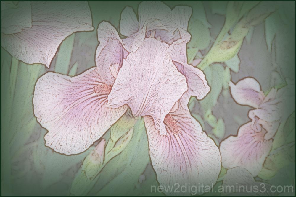 From My Garden 2/4