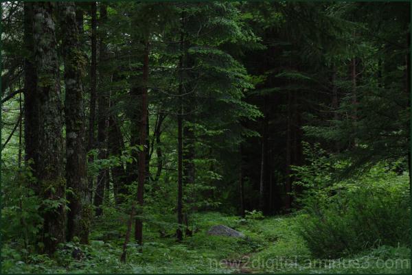 The Deep Dark Forest