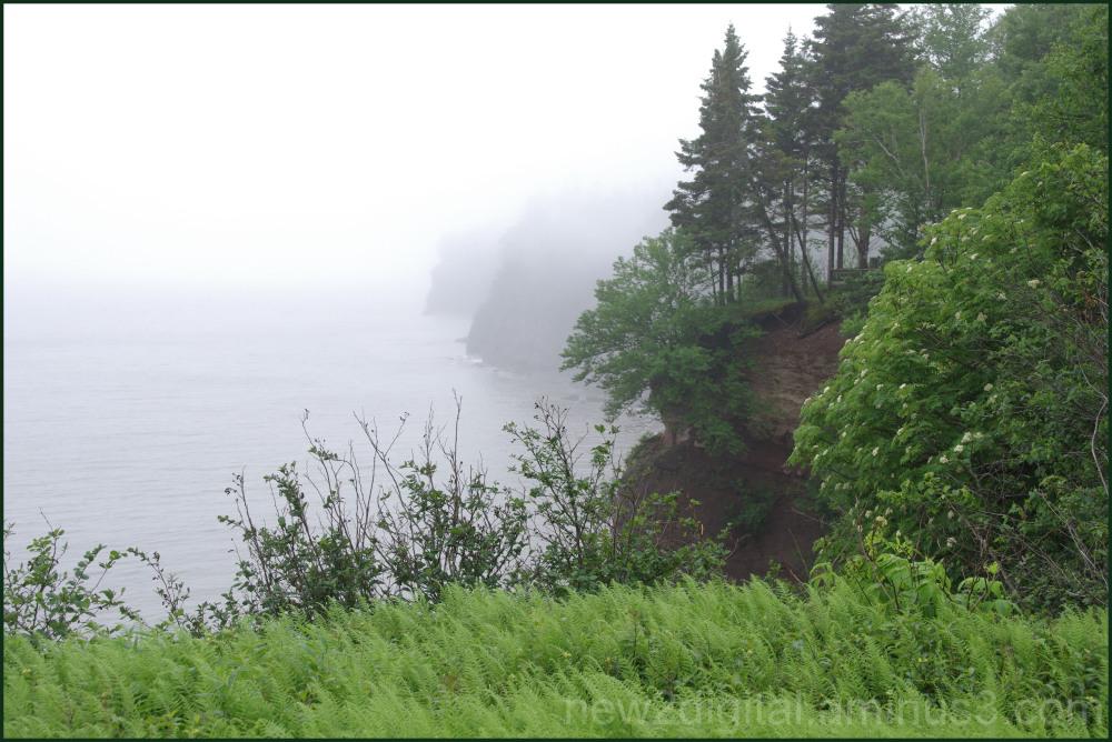 Fog & Ferns