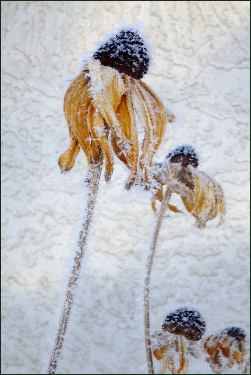 Frosted Floral