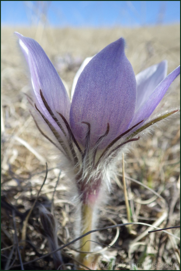 Spring Flowers 1/3
