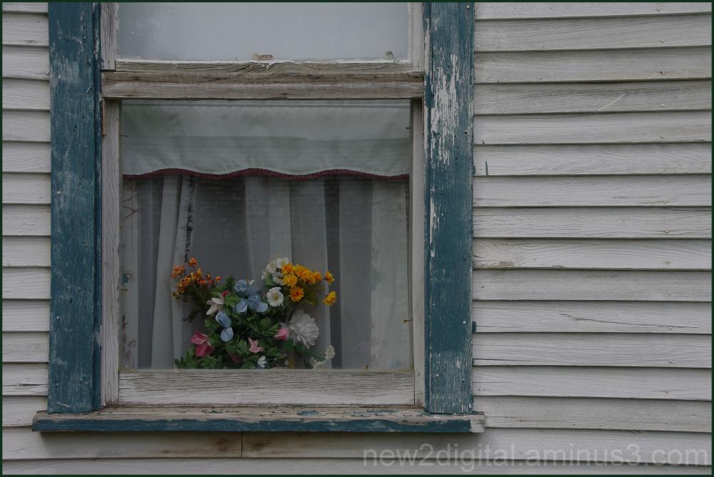 Flowers & Peeling Paint