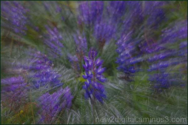 Flower Rush 1/2