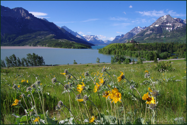 Wild Flowers of Waterton 1/7