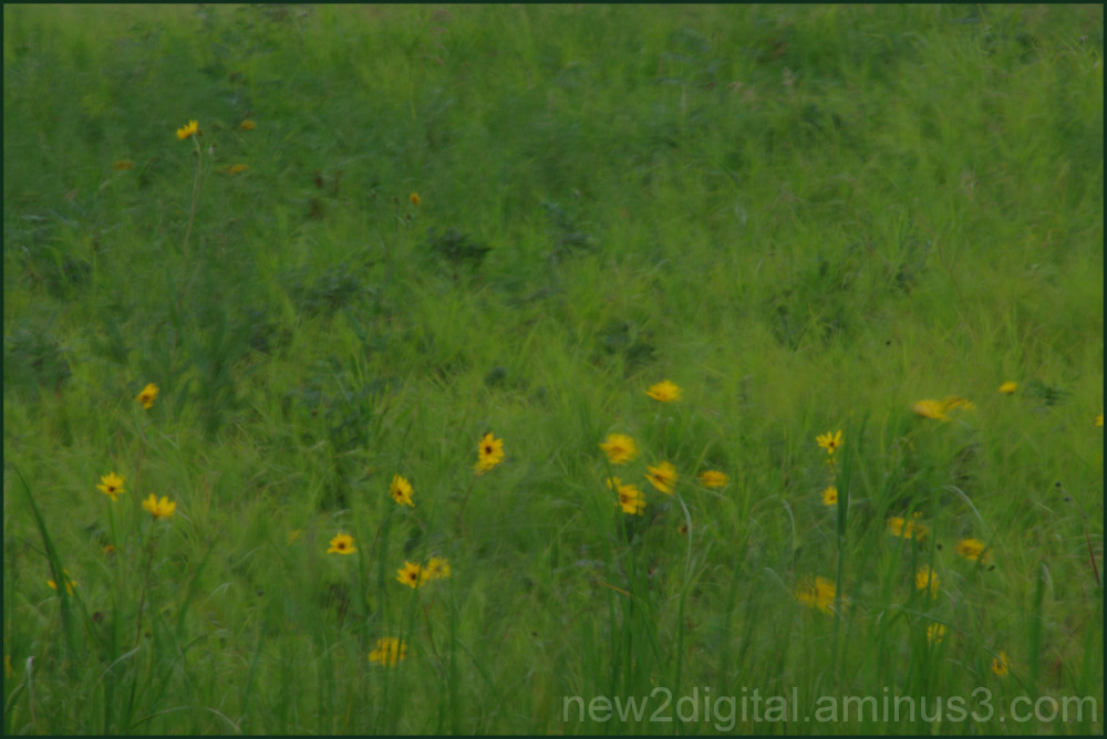 Wildflowers in the Wind