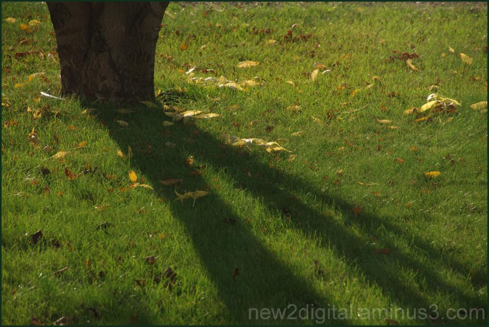 Autumn Shadow & Light