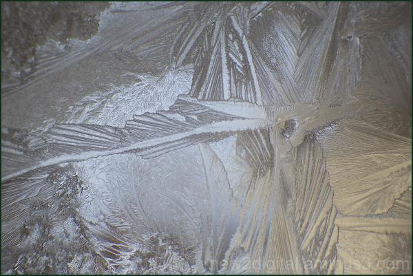 Bird Of Ice