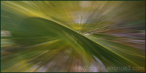 Wind in the Palm Leaves