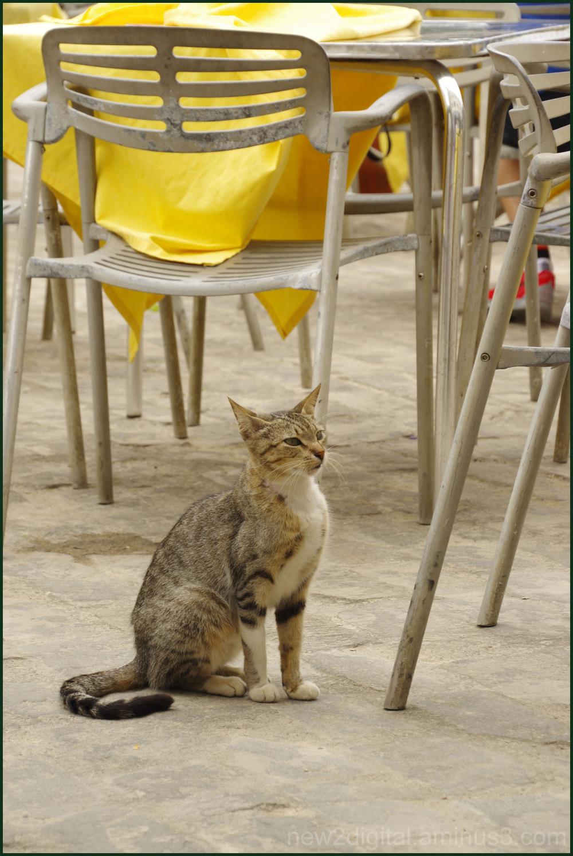 Cuban Kitty