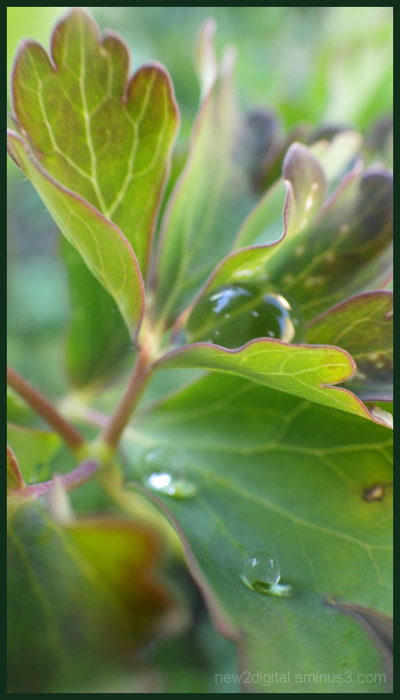 Droplet 1/2