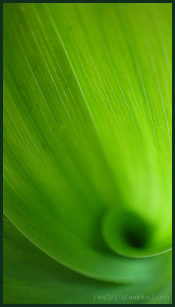 So Green 2/2