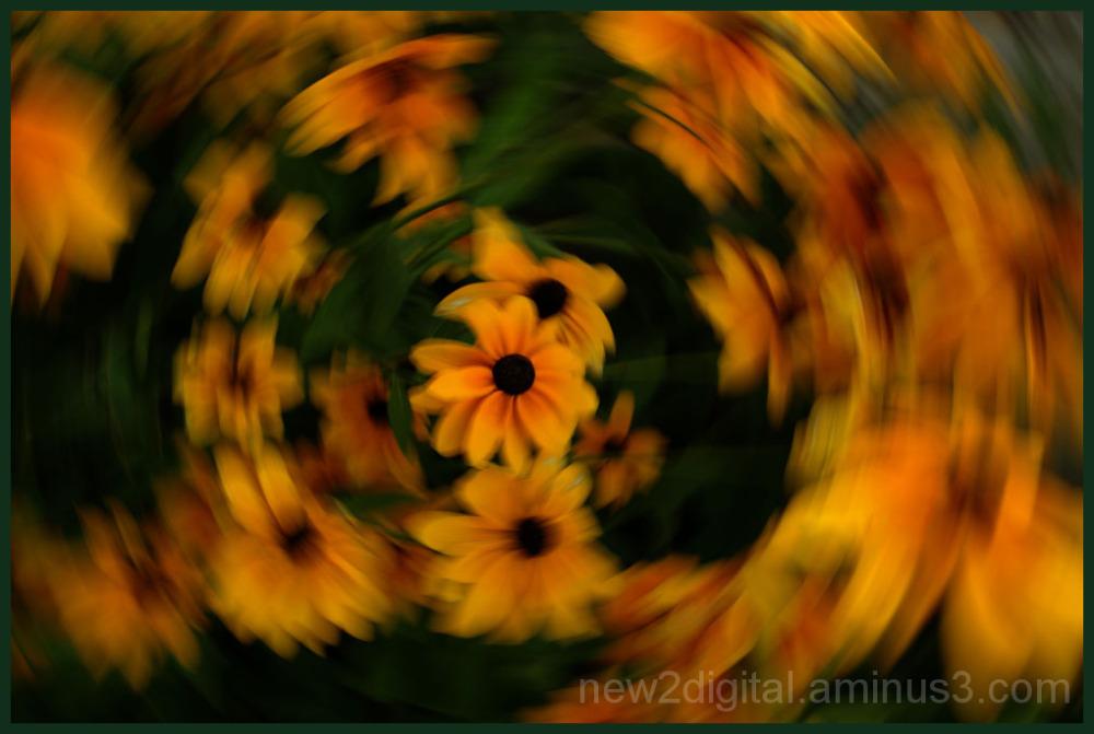Spin Around the Garden 1/2