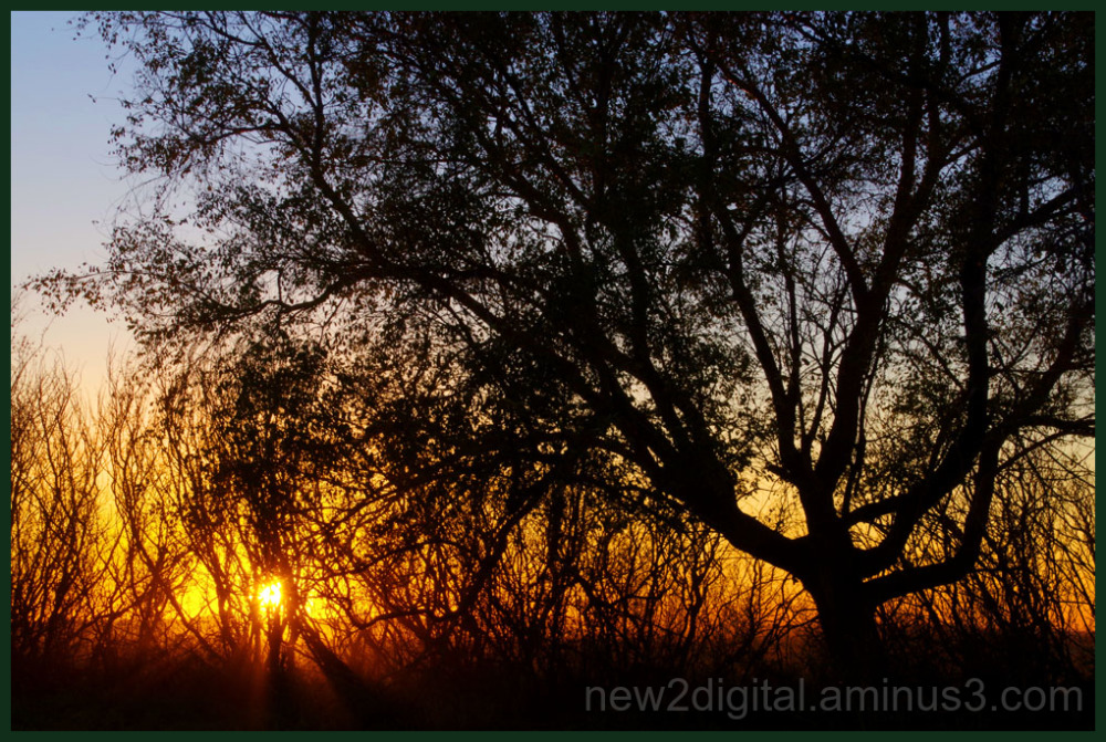 Sunset at the Farm 1/3