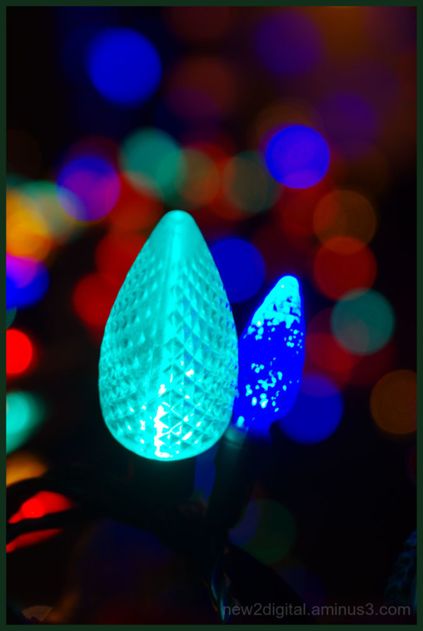 12 Days of Christmas Lights - Day 7