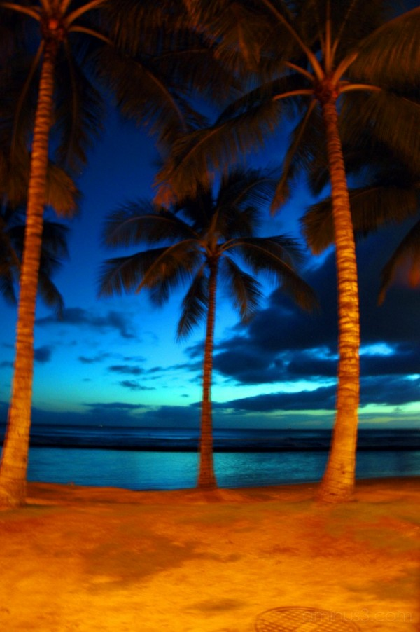 palm tree, sunset
