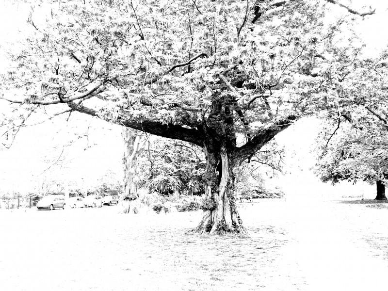 Wisdom tree?