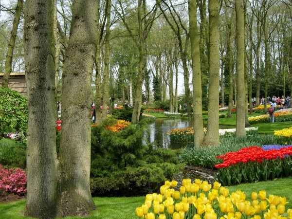 Keukenhof Gardens - II
