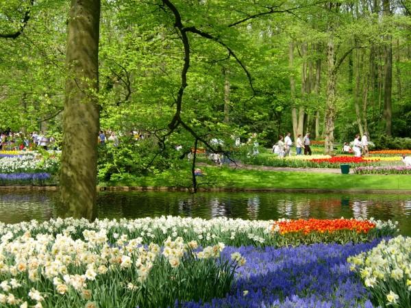 Keukenhof Gardens - III