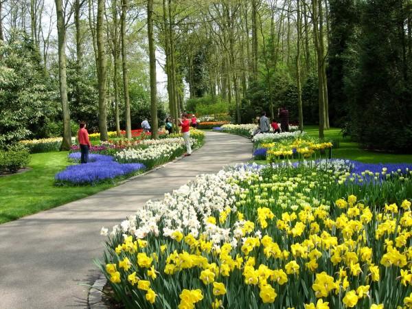 Keukenhof Gardens - IV