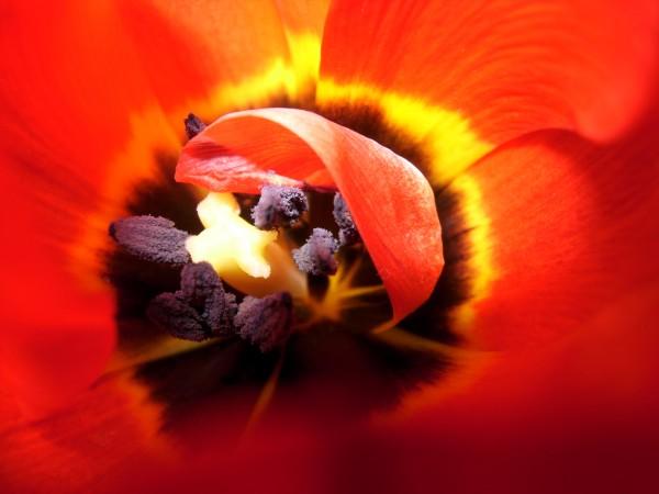 Tulip Interiors II