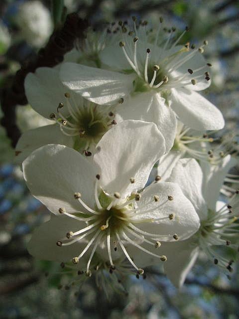 [spring]