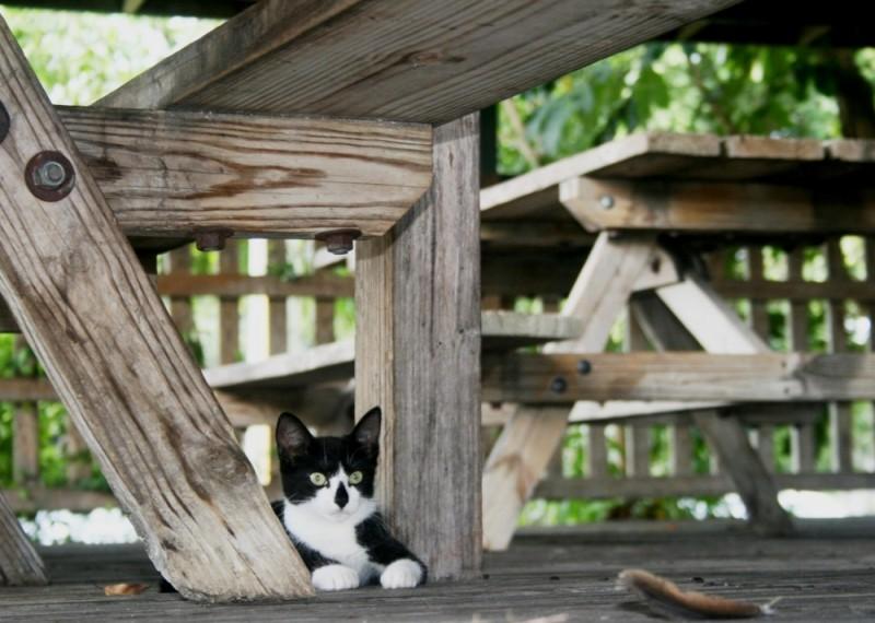 wildcat's kitten.