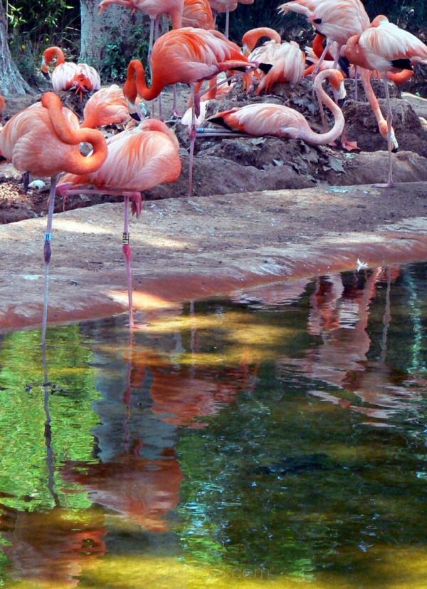 "flamencs flamencos flamingos ""pepa aston"" pepaasto"