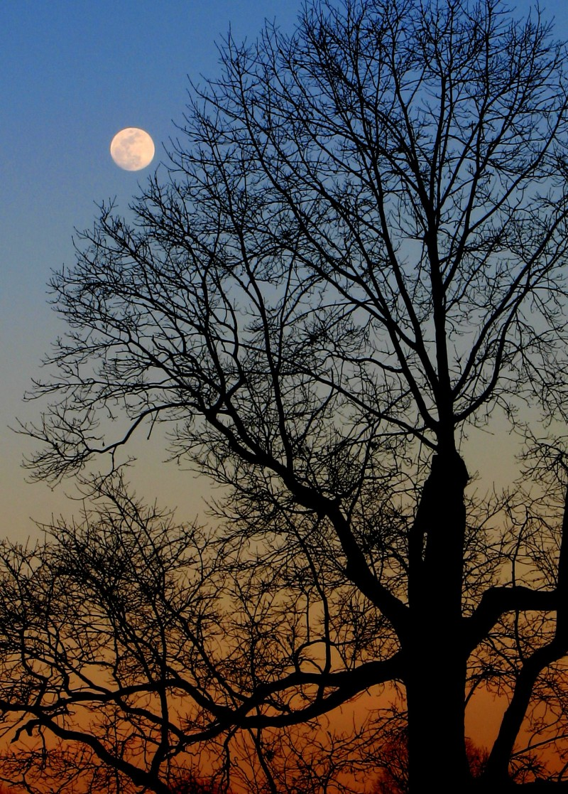 Moon Over Tree