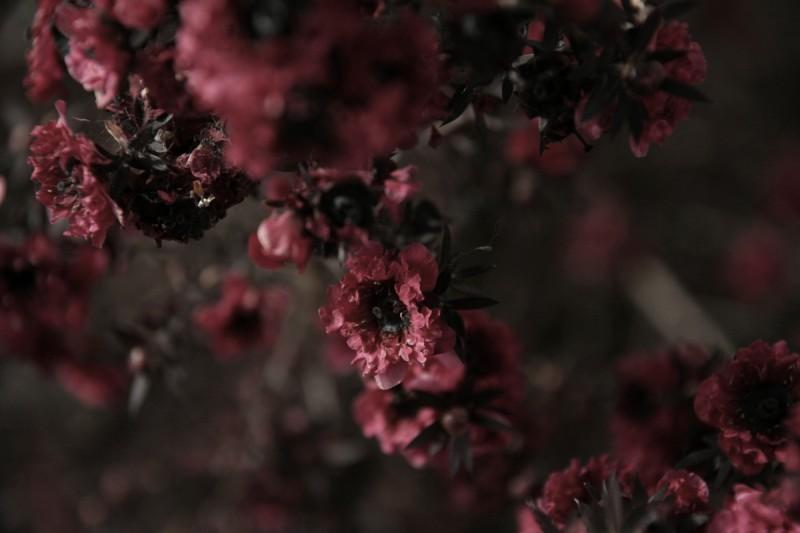 dead colors