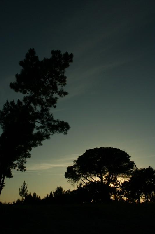silhouettes on sun down