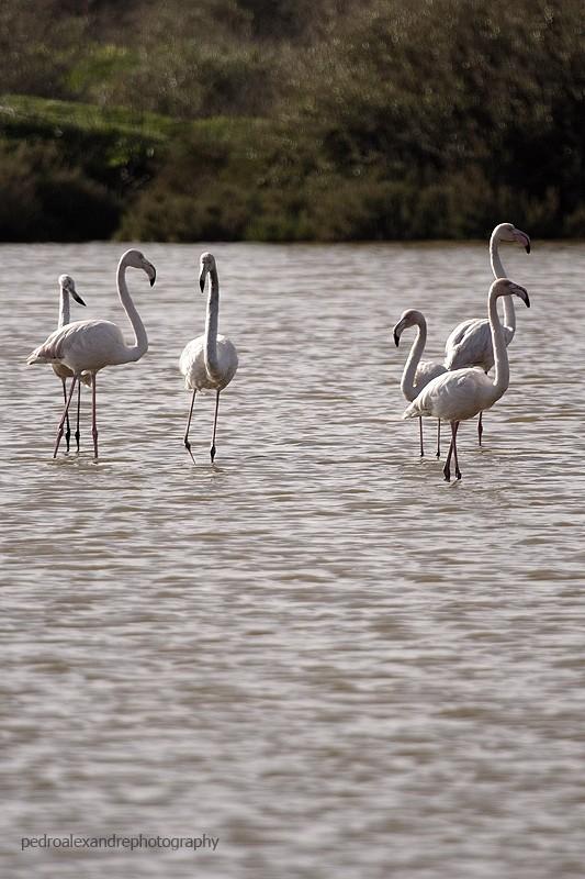 flamingos on tejo?!?!!