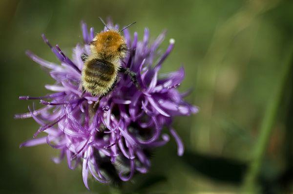 bee buzzin