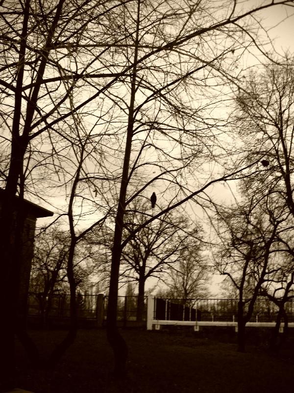 bird on a tree