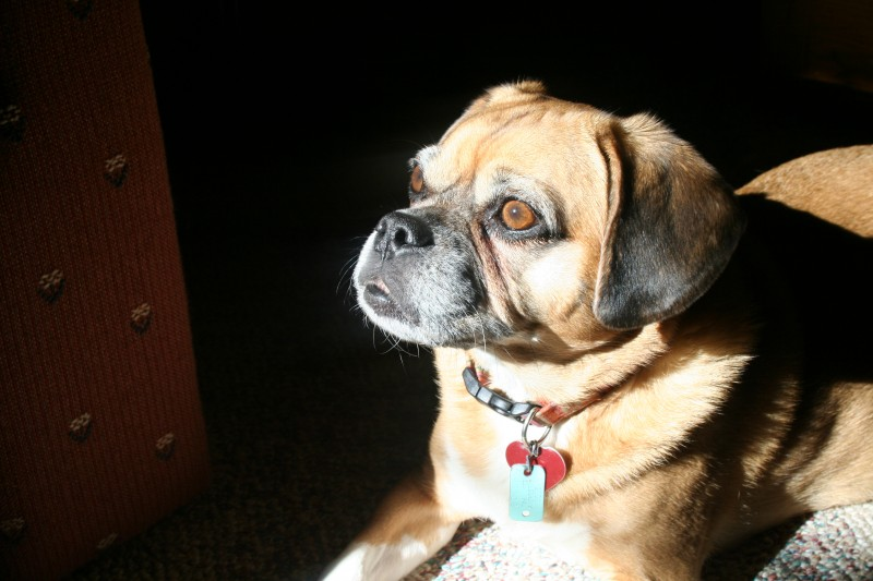 Abby staring at the sun