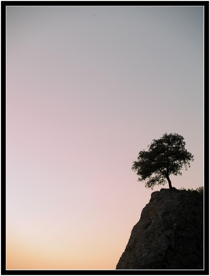 Árbol solitario   /   Lonely tree