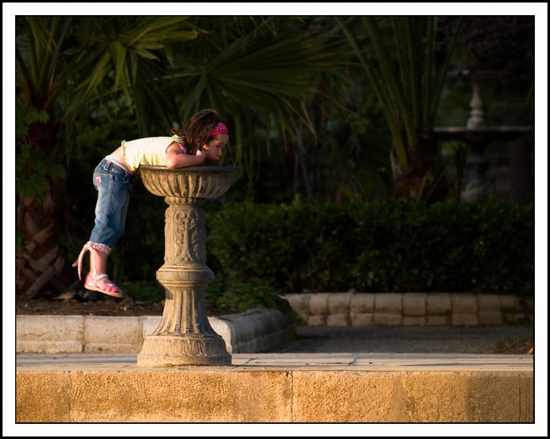 Bebiendo en la fuente / Drinking in the fountain