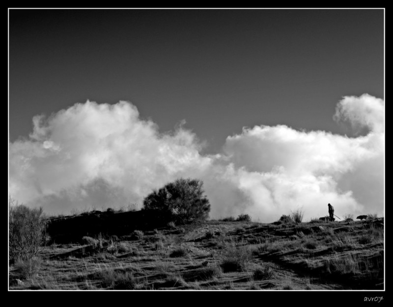 El pastor   /   The shepherd